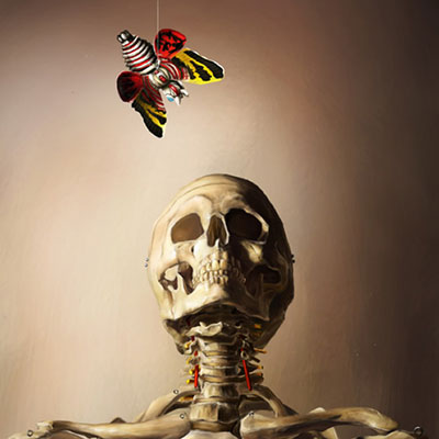 model skeleton still life